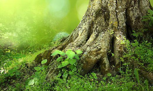 Der Wald hat so viel Positives zu bieten - das soll unter anderem bei der Tagung transportiert werden