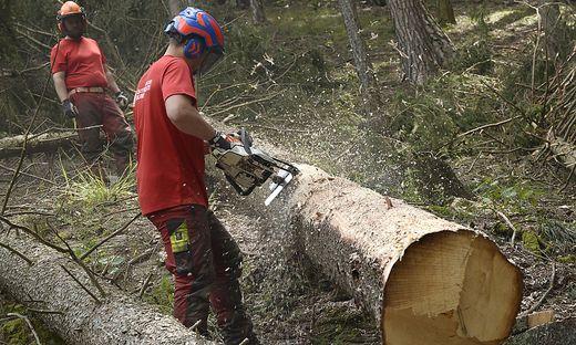 Die Schadholzmengen nehmen massiv zu