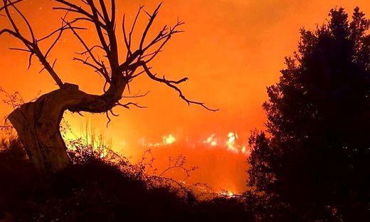 Mehrere Waldbrände auf Korsika außer Kontrolle