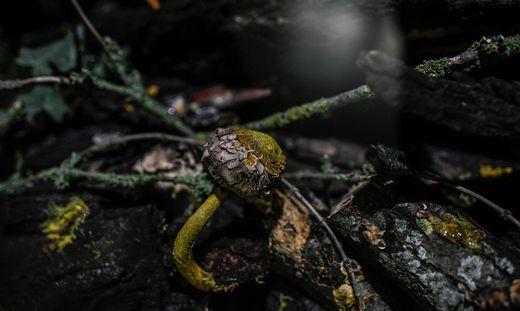 Nicht Tier, nicht Pilz: Einzeller