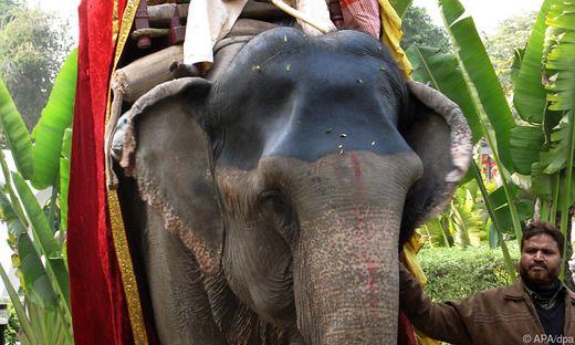 Strengere Gesetze für die Haltung von Elefanten in Sri Lanka