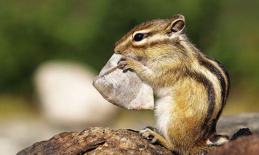 Mann füttert Eichhörnchen in den USA mit Crystal Meth