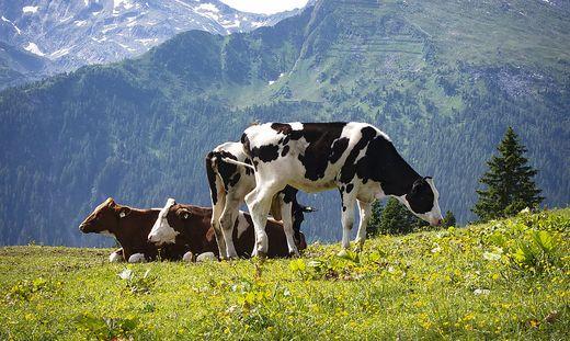 Preis pro Kuh sei auf 82 Cent/Kilo gesunken, so ein Rinderbauer