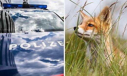 Überreste von Füchsen gefunden: Polizei bittet weiter um Hinweise (Symbolfoto)