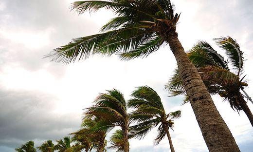 Palmen im Wind