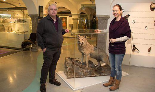 Werner Thelian und Christine Ragger mit dem letzten erlegten Wolf im Lavanttal (Leihgabe Landesmuseum Kärnten)