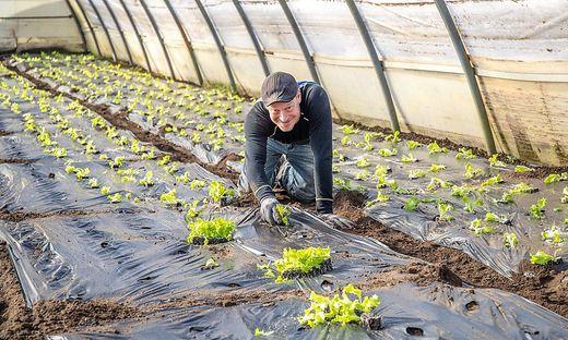 Nikolaus Toschkov verkauft bereits den ersten Salat dieser Saison.