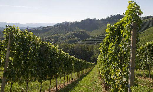 Wein, Rieden, Lagen, Österreich