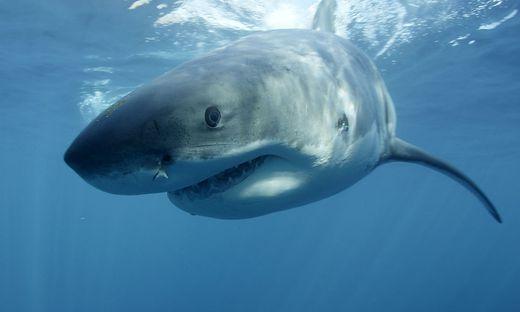 17-Jährige verliert bei Hai-Attacke Teil ihres Beins
