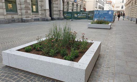 Die Blumen blühen nur vorübergehend - wie geplant kommen Bäume in diese Kästen