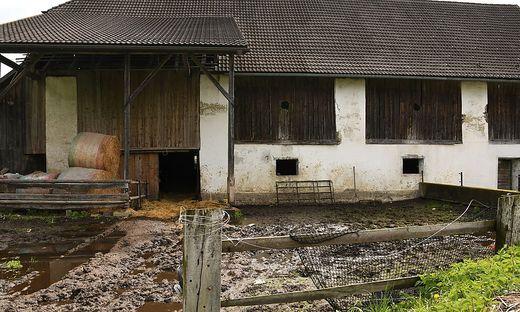 Auf diesem Bauernhof in St. Nikolai bei Feldkirchen wurden die toten Rinder entdeckt
