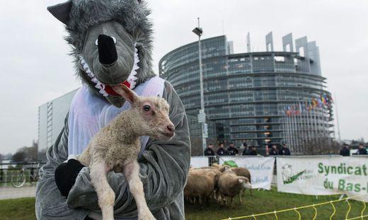 EU PARLIAMENT SHEPHERD´S PROTEST