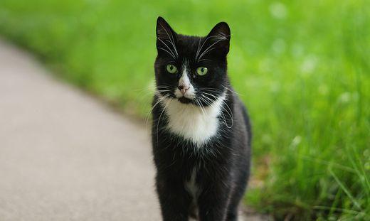 nieder sterreich zwei katzen in einem m llsack in krems gefunden. Black Bedroom Furniture Sets. Home Design Ideas
