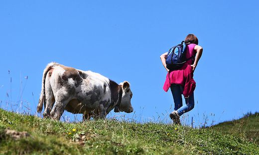 Das Urteil nach der tödlichen Kuhattacke in Tirol wurde bestätigt
