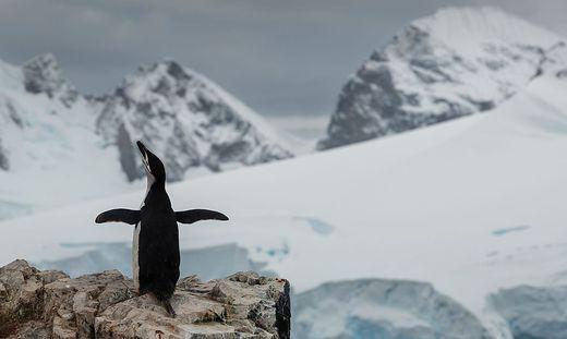 Düstere Aussichten für die Antarktis und ihre Bewohner