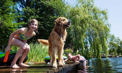 Völkermarkter Hunde können sich nur in Flüssen oder in den Nachbarbezirken abkühlen