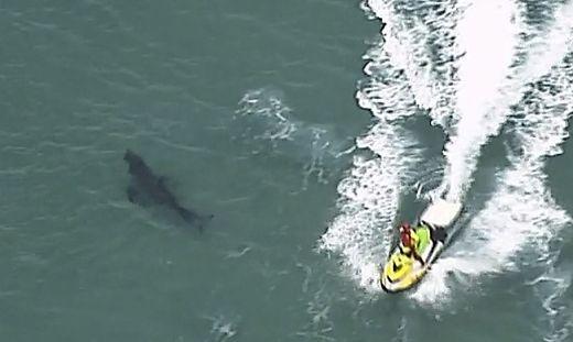 Australien: Surfer kämpfen gegen großen Hai - ohne Erfolg