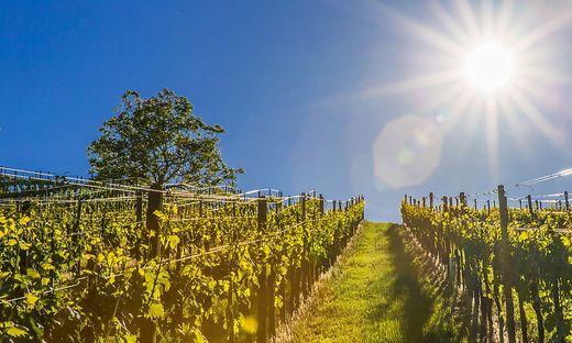 Weinbau Steiermark