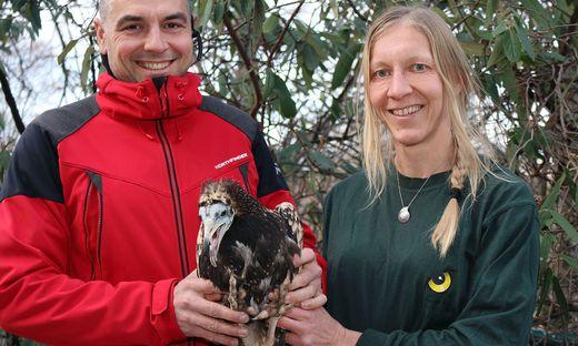 Tierpflegerin Regina Riegler übergibt Schmutzgeier Andi an Green Balkans