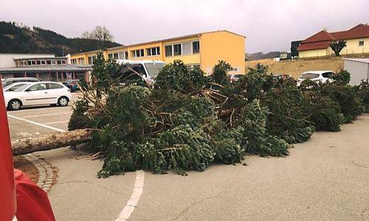 Umgestürzte Bäume wie hier in Griffen sorgten auch bei Stromleitungen für Schäden