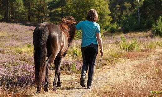 Ein Pferd muss laut Tierhalteverordnung mehrmals wöchentlich ausreichend bewegt werden