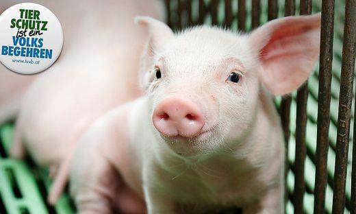 Tierschutzvolksbegehren will 100.000 Unterschriften erreichen