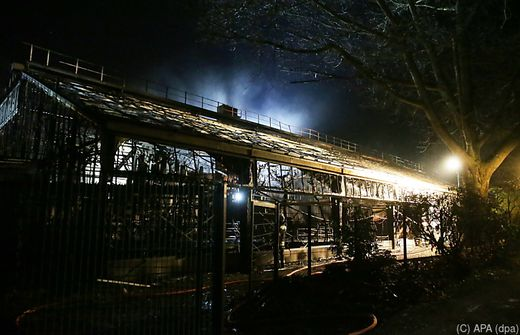 Feuer in Krefelder Zoo: Affenhaus abgebrannt - alle Tiere tot