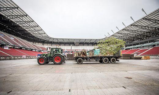 Die ersten Bäume wurden diese Woche aufgestellt
