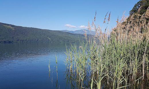 Der Schilfgürtel am Millstätter See