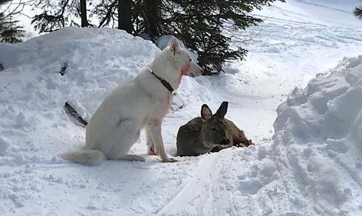 Das Reh musste schließlich von einem Jäger getötet werden