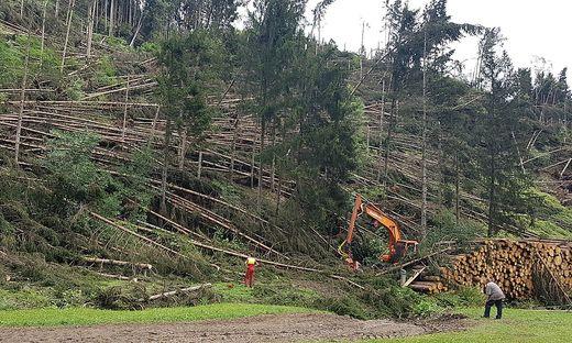 """Der Sturm """"Yves"""" hat im Bezirk rund 500.000 Festmeter Holz flachgelegt"""