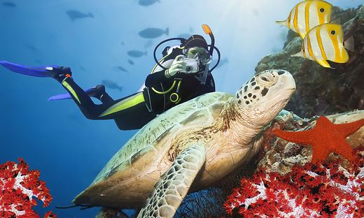 Die Unterwasserwelt des Tauchparadieses Port Ghalib ist noch ein Geheimtipp