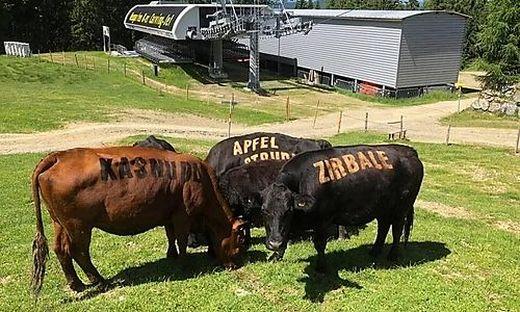 """Seit Jahren sind die Kühe als """"lebende Speisekarten"""" auf der Alm unterwegs"""
