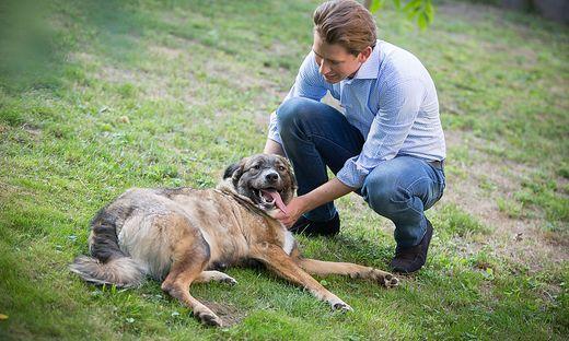 Aus einem Wahlkampfvideo der ÖVP: Kurz mit Hund