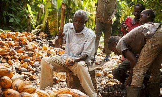 Fairtrade Österreich: Preis für fairen Kakao steigt um 20 Prozent