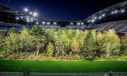 """299 Bäume, viele Besucher und  sehr viele Diskussionen: Das ist """"For Forest"""""""
