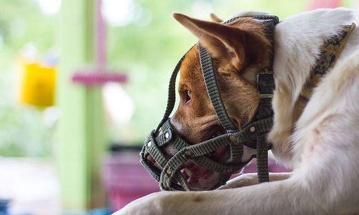 Maulkorbpflicht Für Alle Hunde