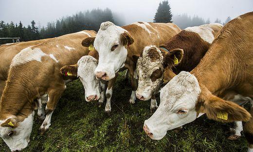 6700 Milchbauern gibt es in der Steiermark