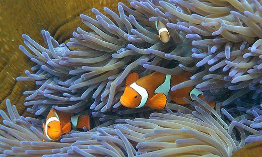 Palau will seine Korallen schützen