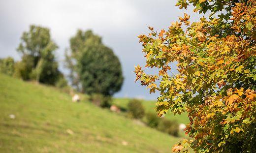 Herbst Sonne Stimmung Arriach