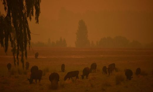 In fünf der sechs Bundesstaaten tobten immer noch Hunderte Feuer
