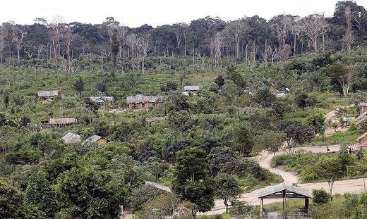 Gerade Brasiliens Regenwald ist massiv bedroht