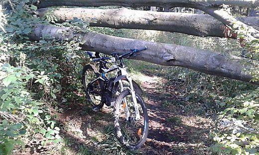 Umgestürzte Bäume stellen ein Sicherheitsrisiko dar