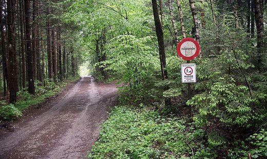 In diesem Wald soll es zu dem Überfall gekommen sein