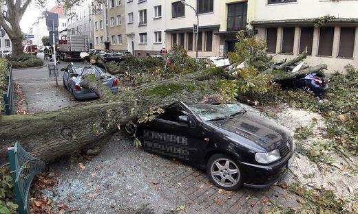 Baum begrub acht Autos unter sich