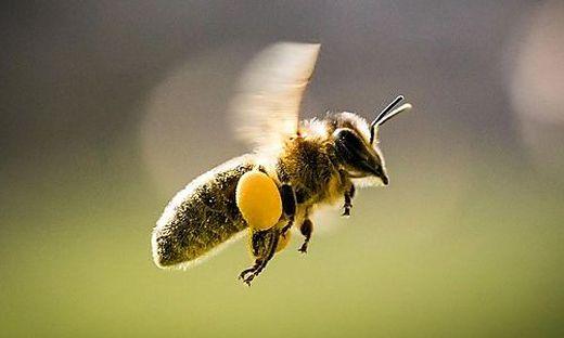 Weil die Ausgänge verschlossen waren, verendeten viele Bienen (Symbolfoto)