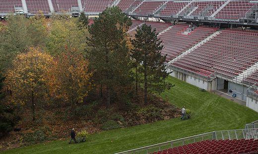 Abschied Mit Arger For Forest Baume Ubersiedeln Nach