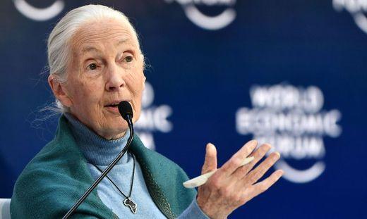Umweltaktivistin Jane Goodall