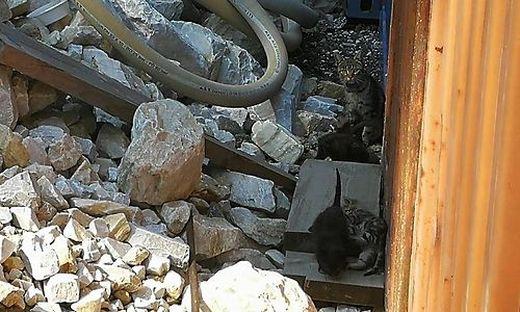 Neun ausgesetzte Katzen von Baustelle gerettet