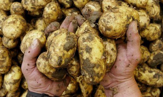 Fr�hkartoffeln
